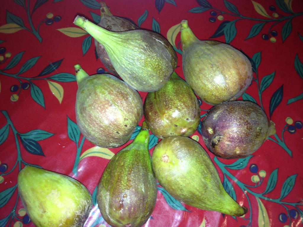 Brunswick Figs in Frome